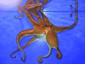 squid5
