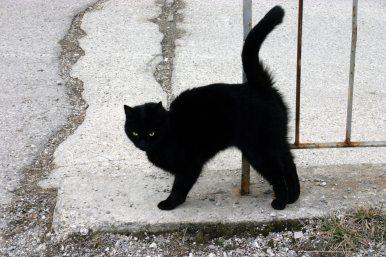 A_Black_Cat.jpg